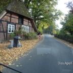 Lüneburger Heude unterwegs